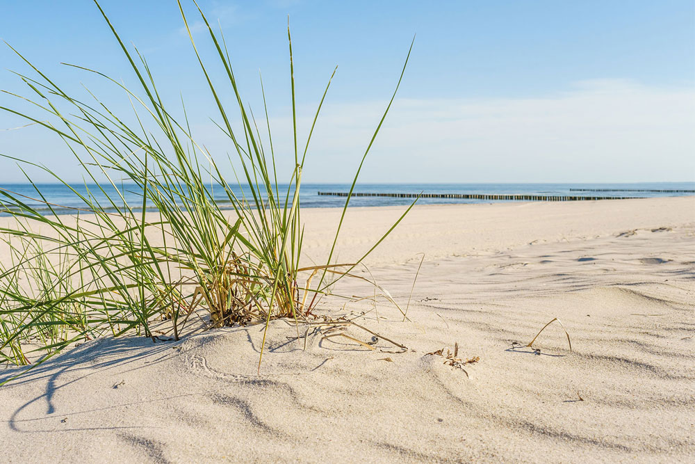 Ferienwohnung Langeoog | Strandnah